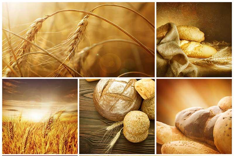 לחם-חיטה