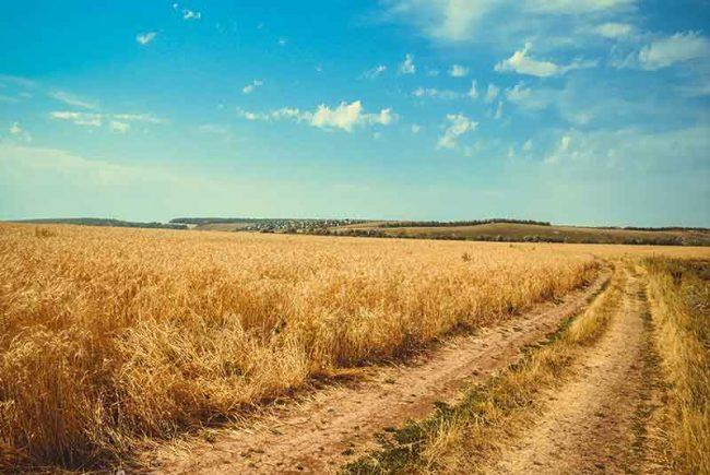 קמח שנטפו לתוכו מים – באילו תנאים ניתן לאפות ממנו מצות לפסח
