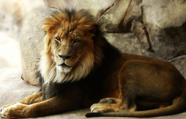 מי שנכנס לתוך עיגול שסימנו אריה באדמה – האם יכול לצאת ממנו?