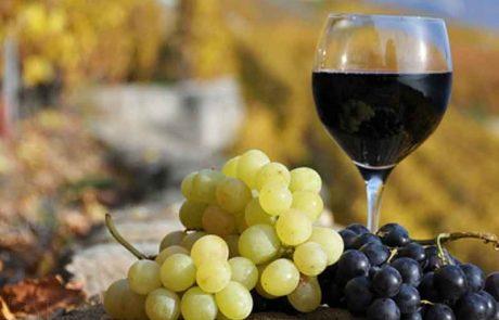מהי הכמות שצריך לשתות מיֵין הקידוש? ● מדוע עדיף לקדש על יין אדום? ● והאם פיסטור נחשב כבישול?