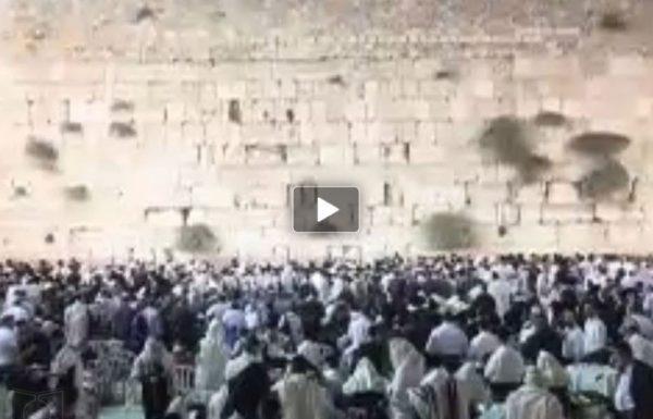 צפו: יארצייט 'החפץ חיים': אלפים התייצבו לתפילה ולימוד בכותל המערבי