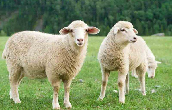 האם איסור צער בעלי חיים כולל גם את בני האדם? מה המקור לאיסור זה?