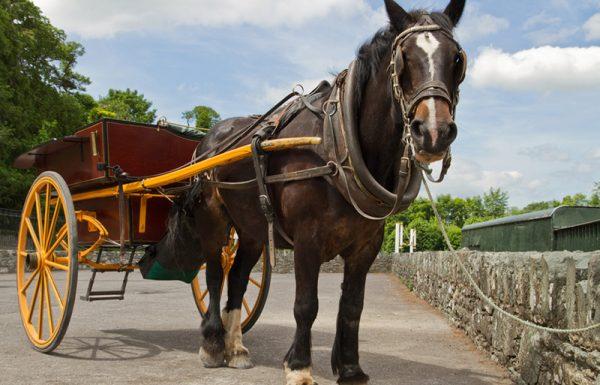 באותה שעה ציווה הרב למשמשו להכניס את הסוס והעגלה לתוך חצר סמויה מן העין ולסגור את השער