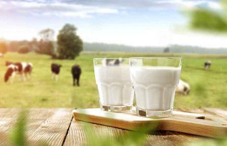 האם סומכים על פיקוח ממשלתי שאסור לערב חלב טמא?