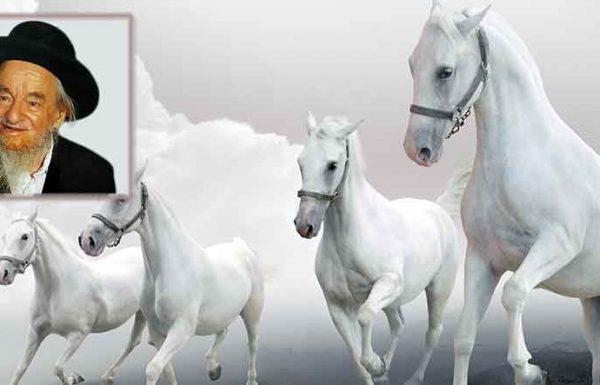 """""""פנה אלי בחור, בעבר ניהל מרוצי סוסים בשבתות, ה' ירחם. פרנסה בשפע, וגיהנום בלי גבול"""""""