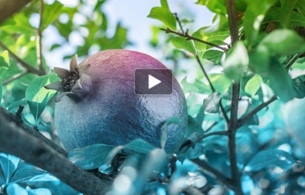 הרצאות וידאו לחודש אלול -תשרי